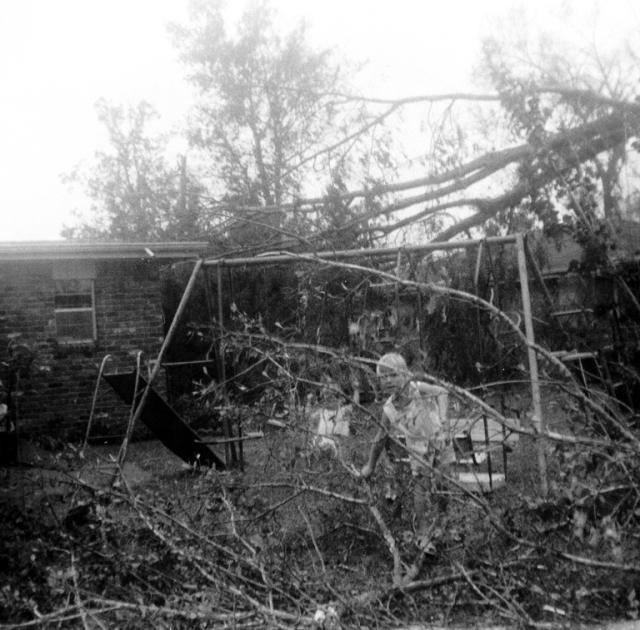 Big broken tree