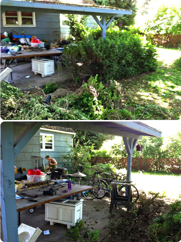 Backyard_01