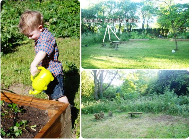 Backyard_05