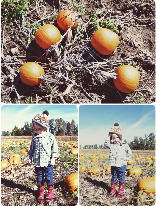 PumpkinPatch_01