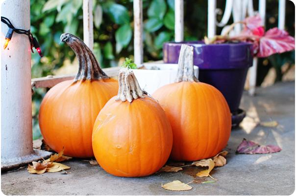 PumpkinPatch_05